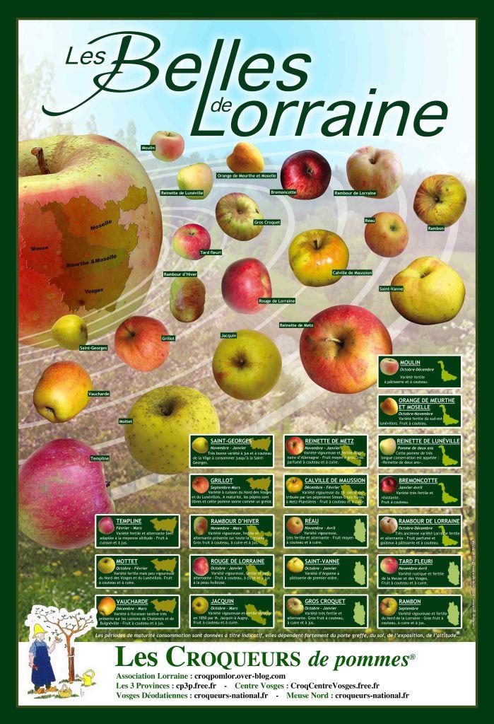Les 20 belles pommes Lorraines